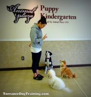 Free Day of Fun Puppy / Dog Training & Supervised Playtime!