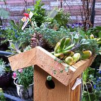 Mini-Garden Workshop!