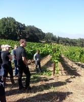 Guided Harvest Vineyard Tour & Wine Tasting