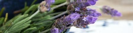 Elevate Your Vibes with Essential Oils - Des Moines WA