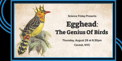 Egghead: The Genius of Birds with Science Friday