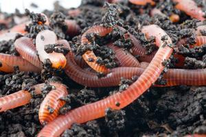 Worm Farming - Small and Large Scale