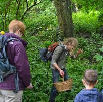 Wild Food Walk at Skelton Grange logo