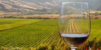 Clase de Introducción al Vino (Wine 101 in Spanish)