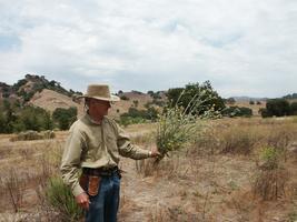 Santa Monica Mountains Weed War