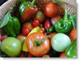Fall Vegetable Gardening - August 9, 2014