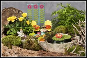Terrariums & Fairy Garden Saturdays