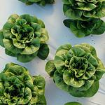 Aquaponics for Your Home