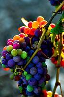 Organic Wine Tasting 1