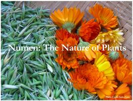 Numen: The  Healing Power of Plants Film Screening and...