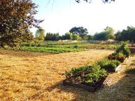 Farm to Table Picnic at Sonoma Broadway Farms
