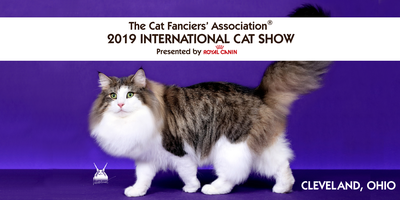 The Cat Fanciers' Association - The World's Largest Registry