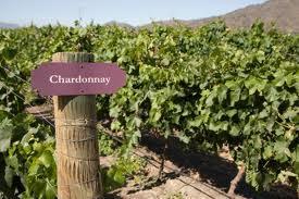Chardonnays across California Wine Tasting
