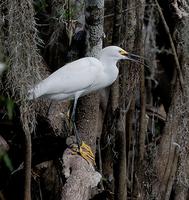 Big Cypress Swamp Adventure - April 8th, 2015