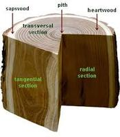 WOOD IDENTIFICATION with Alex Enarson