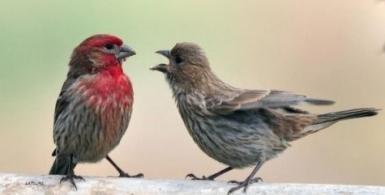 An Introduction to Bird Language