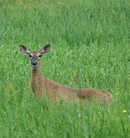 Deer Ecology and Management for Landowners - Hike