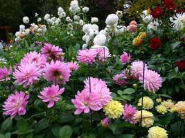 "Workshop: ""Dividing & Growing Dahlias"" with Amelia..."