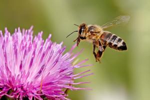 Bee-autiful Gardens