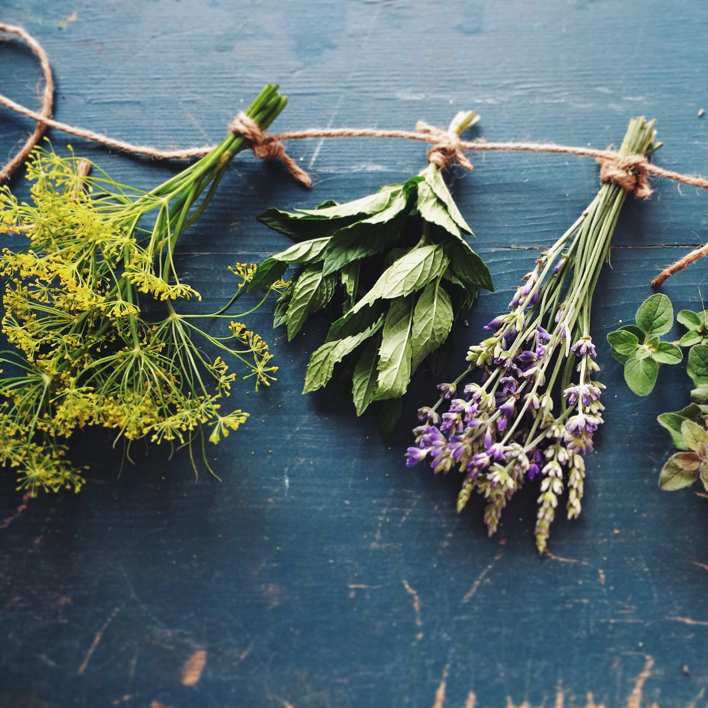 Herbal Medicine with Local Plants: Autumn Equinox Edition