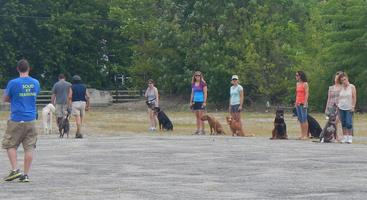 Group Dog Training w/Jon at Solid K9 Training