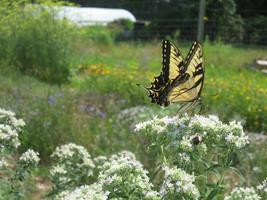Planning Ahead to Promote and Enhance Native Pollinator...