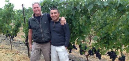 Guided Harvest Vineyard Tour