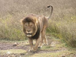 Toronto - African Safaris  @ 11AM