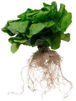 Starting a Successful Hydroponic Business