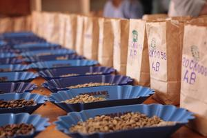 Kenya Showcase: An Intro to Coffee's Holy Grail