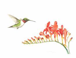 Botanicals & Birds - A Botanical Art Workshop with...