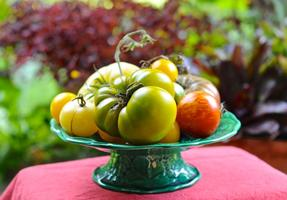 Tomato & garlic fest, with Alana Chernila