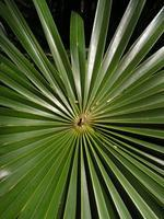 Palm Care Class