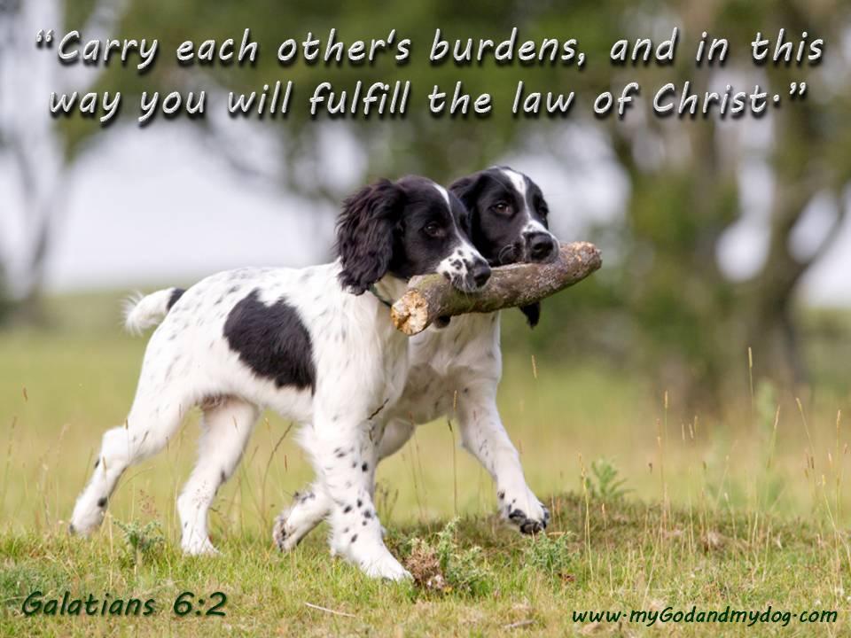 Pets, People and Prayers - Bible Study Class