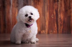 Devine Canine Mini Shoots