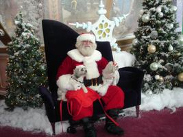 Dolphin Mall's Pet Nights with Santa