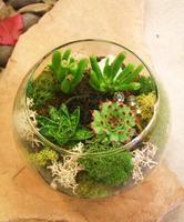 """""""Succulent"""" Terrarium / Utsuwa Floral Design"""