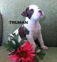 Panacea, PACC911 and & KPMG Pet Adopt-A-Thon