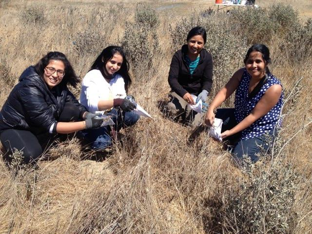 Restore Our Urban Wetlands with the Golden Gate Audubon Society
