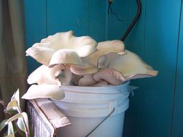 Grow Your Own Mushrooms At Home!