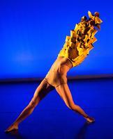 Provisional Landscapes: AVA Dance Company