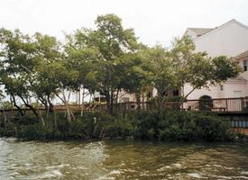 Living on Florida Waters: What to Know About...