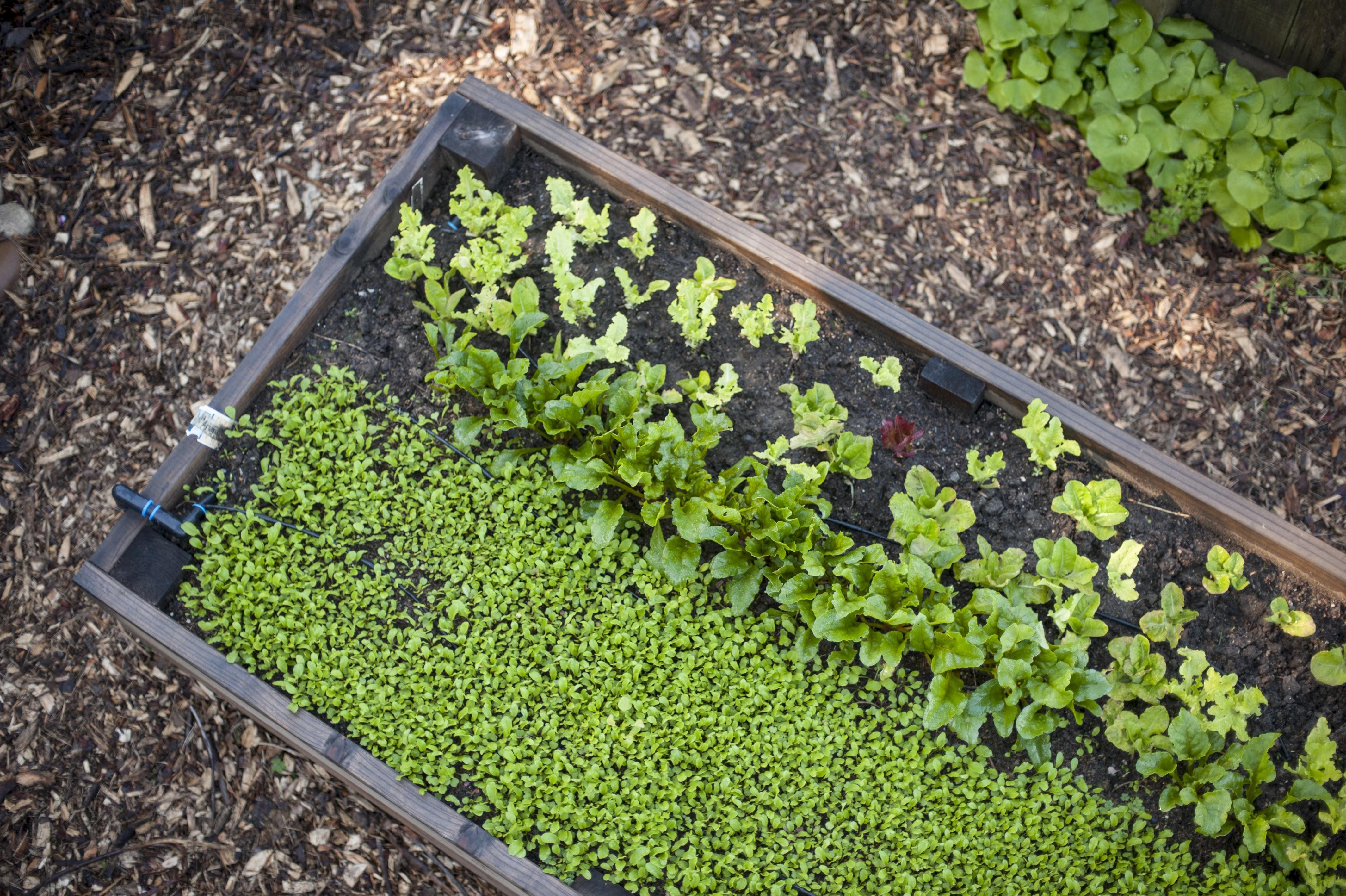 POSTPONED: Dig In! Six-Part Edible Gardening Series