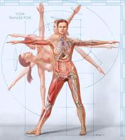 Anatomy for Yogis Workshops, entire weekend OR per...