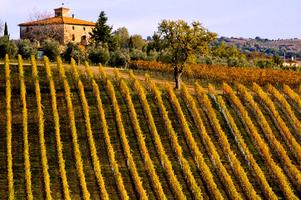 Unforgettable Wine Dinner: The Wines of Casanova di Neri