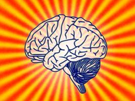 Meet your Brain! A workshop for children aged 7-11...