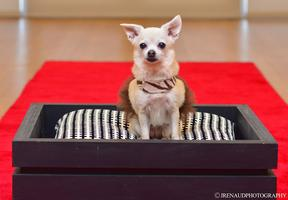 """DogVacay """"Pups in Tux"""" Red Carpet Event"""