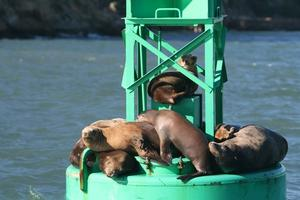 Local History and SF Bay Wildlife Sail