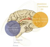 Neuroplasticity Made Easy - For You!