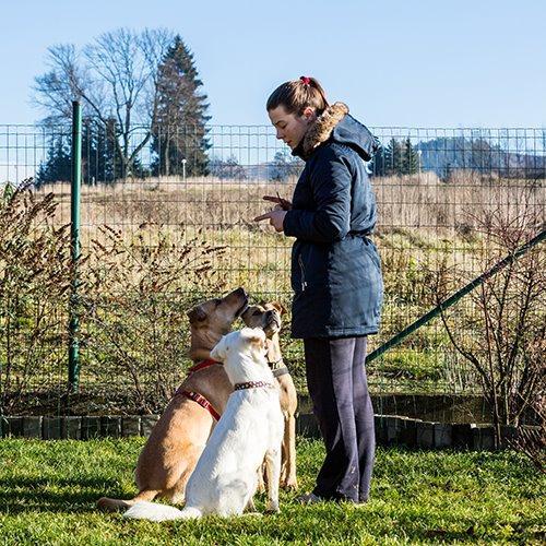 Adelaide Animal Carers, Retailers & Pet Groomers Consultation Workshop